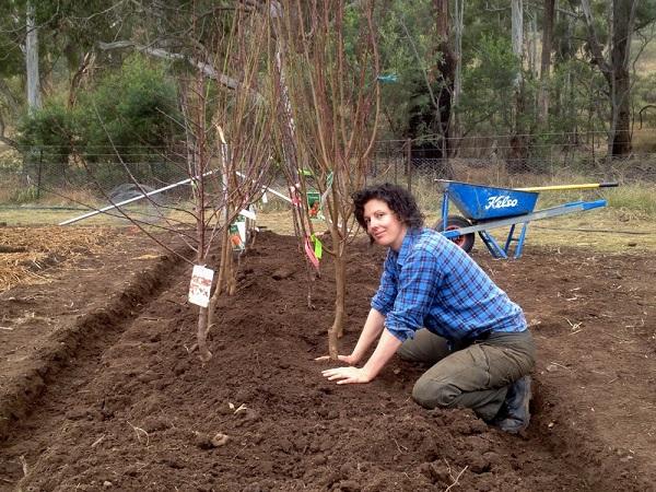 посадка яблони весной саженцами с закрытой корневой системой
