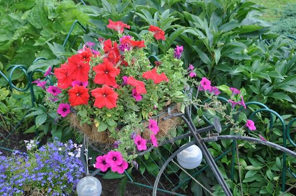 подкормка для петунии для цветения