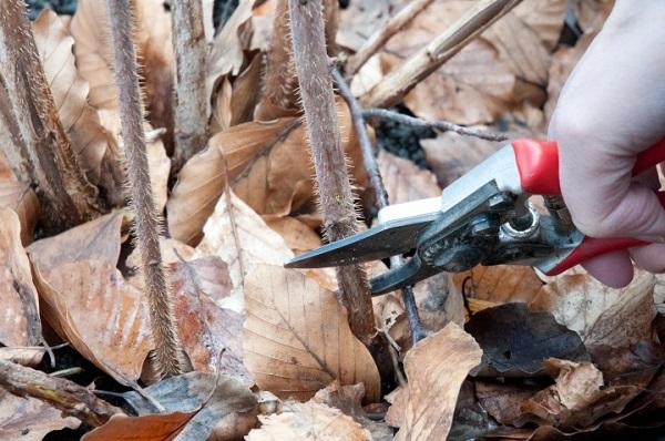 как обрезать крыжовник осенью