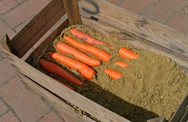 где лучше хранить морковь в квартире