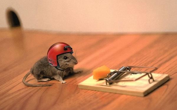 средство от мышей в доме
