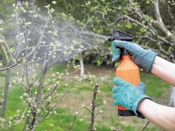 весенняя обработка сада