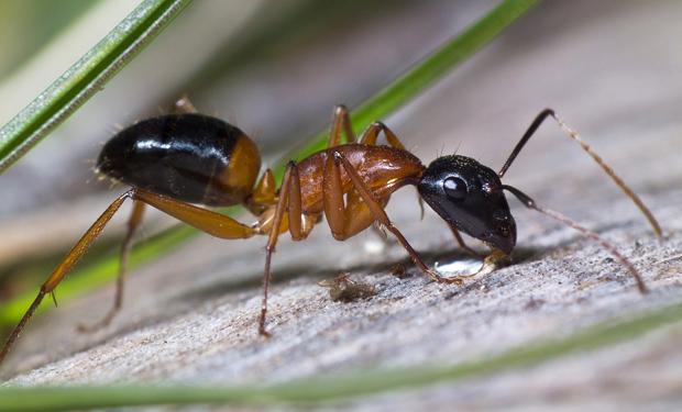 Как бороться с мураыьями