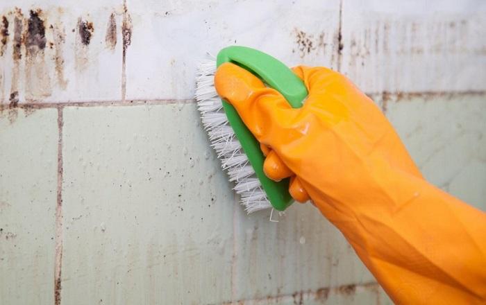 как вывести плесень со стены в квартире