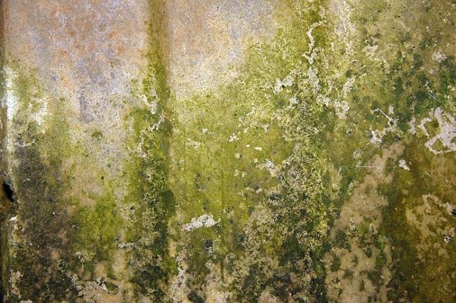 Зеленая плесень на стенах