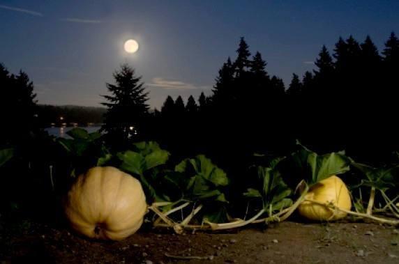 Лунный посевной календарь на 2019 год садовода и огородника