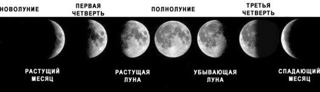 Когда сажать рассаду по лунному календарю