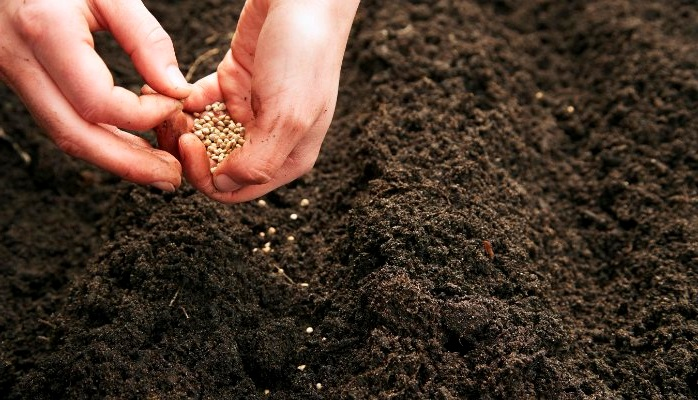 что нужно для прорастания семян