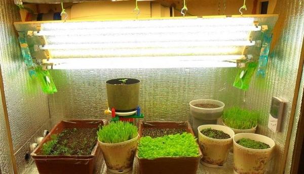 Выращивание рассады под лампой 32